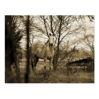 Horse in the wild postcard