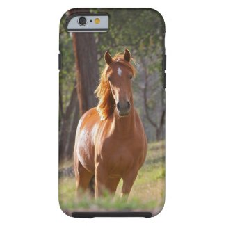 Horse In The Woods Phones