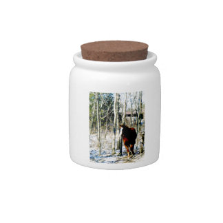 Horse in the woods candy jar