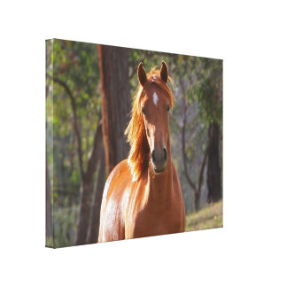 Horse In The Woods Canvas Print