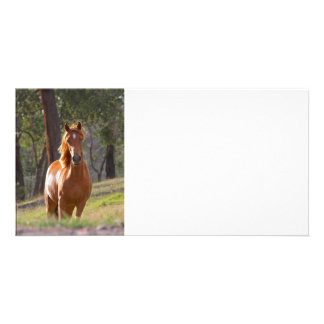 Horse In The Woods Card