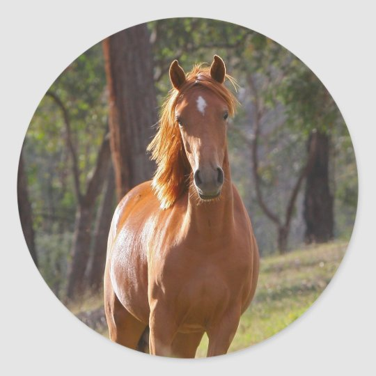 Horse In The Woods Classic Round Sticker