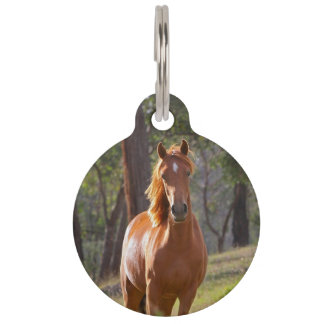 Horse In The Woods Pet Nametag