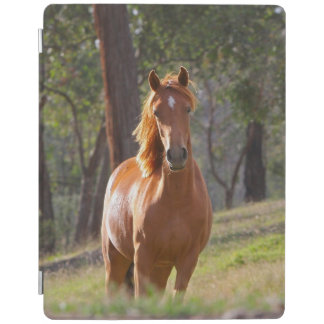 Horse In The Woods iPad Cover