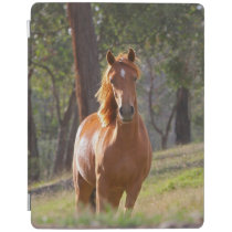 Horse In The Woods iPad Smart Cover