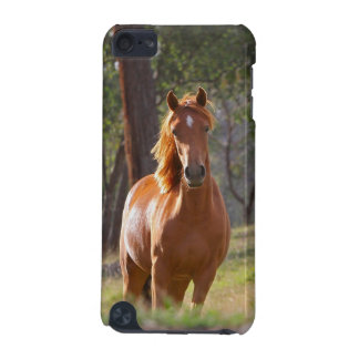 Horse In The Woods iPod Touch (5th Generation) Cover