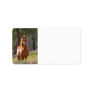 Horse In The Woods Label
