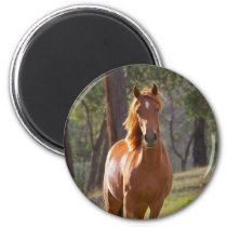Horse In The Woods Magnet