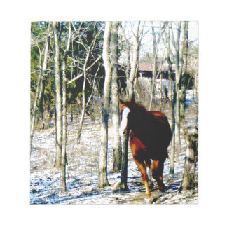 Horse in the woods scratch pads