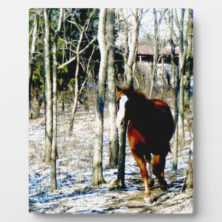 Horse in the woods plaques