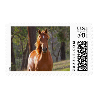 Horse In The Woods Postage
