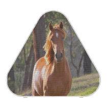 Horse In The Woods Speaker