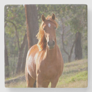 Horse In The Woods Stone Coaster