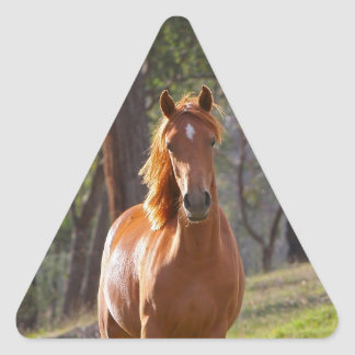 Horse In The Woods Triangle Sticker