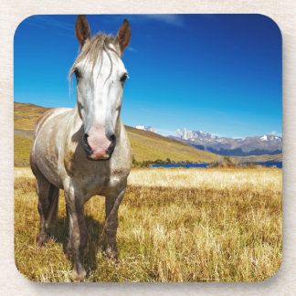 Horse in Torres del Paine National Park, Laguna Drink Coaster