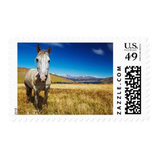 Horse in Torres del Paine National Park, Laguna Postage Stamp