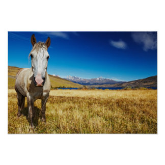 Horse in Torres del Paine National Park, Laguna Poster
