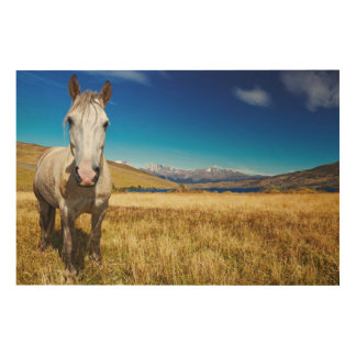 Horse in Torres del Paine National Park, Laguna Wood Print