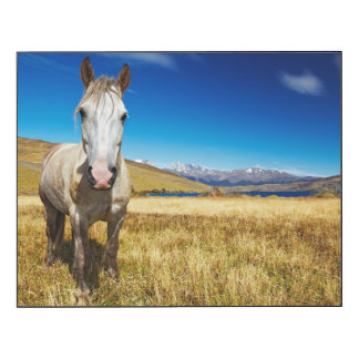 Horse in Torres del Paine National Park, Laguna Wood Wall Art