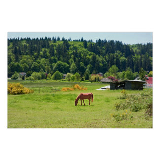 Horse in Valley Print