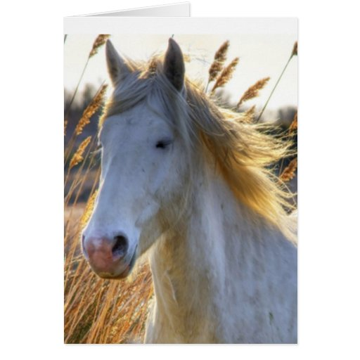 Horse In Wheat Card