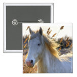 Horse In Wheat Pinback Buttons
