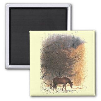Horse in Winter Magnet