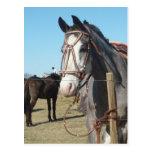 Horse in Yacanto, Córdoba Postcards