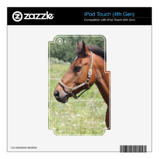 Horse iPod Touch 4G Decals