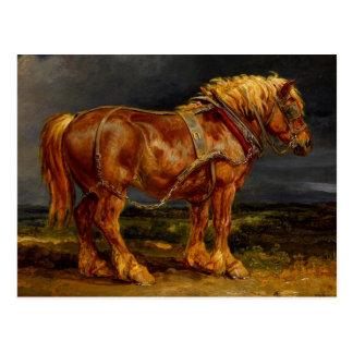 Horse - James Ward Post Card