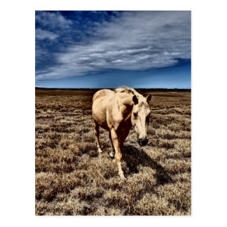 Horse.JPG blanco Postal