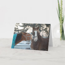 Horse kiss Christmas card. Holiday Card