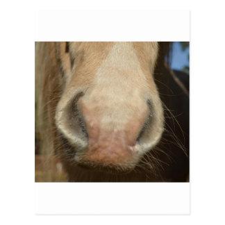Horse Kiss Postcard