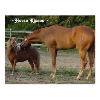 Horse Kisses Postcard