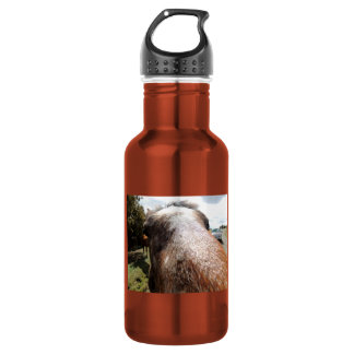 Horse knows 18oz water bottle