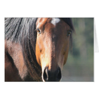 Horse: Large Brown Horse Close-Up of Face Card