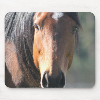 Horse: Large Brown Horse Close-Up of Face Mouse Pad