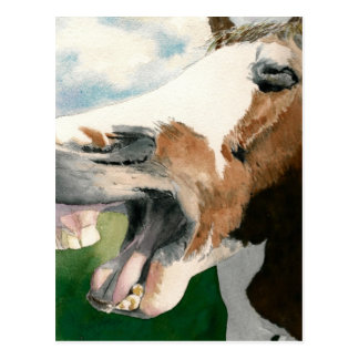 Horse Laugh Post Cards