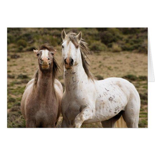 Horse Laugh Wild Horse Greeting Card