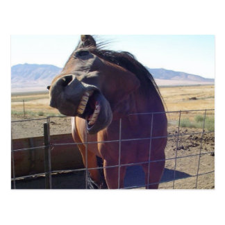 Horse Laughing Postcards