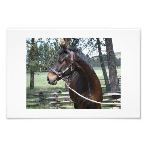 Horse looking away photo print