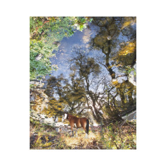 Horse Looking Back canvas wrap