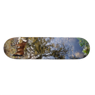Horse Looking Back skateboard