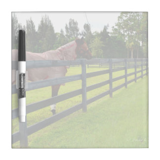 Horse looking down fence path Dry-Erase board