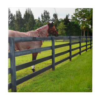 Horse looking down fence path small square tile