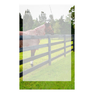 Horse looking down fence path stationery