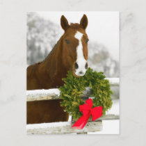 Horse looking over fence postcard