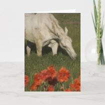 Horse Love Holiday Card