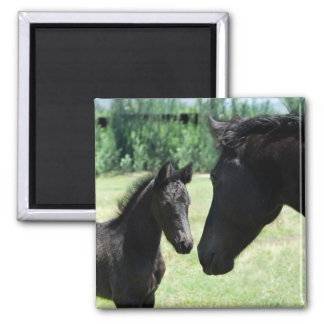 Horse love mom and baby fridge magnets