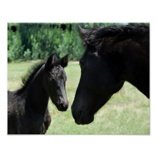 Horse love mom and baby poster